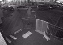 Жестокая расправа над котом в Краснодаре попала на камеру, фото — «Рекламы Краснодара»