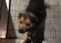 В Гулькевичах неизвестные отстреливают собак ядовитыми дротиками, фото — «Рекламы Гулькевичей»