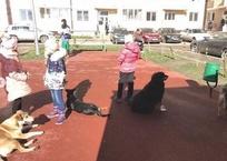 «Оккупация» Краснодара бродячими собаками достигла мега-масштабов – горожане на пределе, фото — «Рекламы Краснодара»