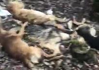 Кладбище собак. Кубанские волонтеры наткнулись на страшную находку ФОТО, фото — «Рекламы Тихорецка»