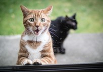Category_animals_cats_surprised_red_cat_and_black_cat_044831_
