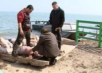 В Приморско-Ахтарске полицейские задержали браконьера с 15 кг пиленгаса, фото — «Рекламы Кубани»
