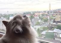 Не так тепло будет на Кубани   , фото — «Рекламы Кореновска»