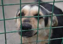 Зверье мое: приют для собак построят в Краснодаре, фото — «Рекламы Кубани»