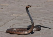 Category_snake_1758994_960_720