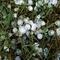 Micro_hail_379270_960_720