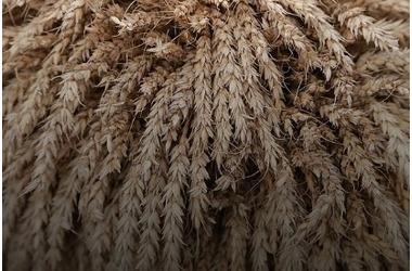В Курганинске мужчина купил 40 тонн пшеницы с помощью поддельного автономера из картона, фото — «Рекламы Кубани»