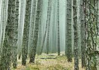 Category_wood_3107139_960_720