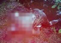 Тело женщины на берегу реки обнаружили в Краснодарском крае, фото — «Рекламы Кубани»
