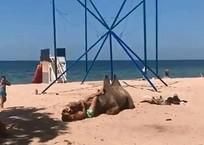 «Вот это любовь:» На кубанском пляже верблюд нежился в объятиях мужчины ВИДЕО, фото — «Рекламы Приморско-Ахтарска»
