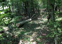 В Геленджике турист закрыл собой сына, на которого падало дерево, фото — «Рекламы Приморско-Ахтарска»