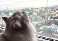 Category_snjn4fx8fd8