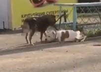 Друг в беде не бросит: бездомный пес отвязал от забора породистую собаку в Новороссийске, фото — «Рекламы Крымска»