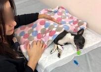 Краснодарец пнул собаку, напугавшую его сына – ЧП в парке переросло в скандал в Сети, фото — «Рекламы Краснодара»
