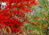 Кубань вошла в ТОП-5 российских регионов с самыми красивыми осенними лесами, фото — «Рекламы Темрюка»