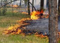 В Северском районе Кубани введен режим ЧС из-за пожаров, фото — «Рекламы Ейска»