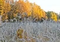 В Краснодарском крае в выходные ожидается до 4 градусов мороза и ветер, фото — «Рекламы Гулькевичей»