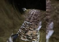 В Приморско-Ахтарске трое мужчин порыбачили на 800 тыс. рублей, фото — «Рекламы Приморско-Ахтарска»