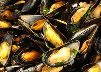 На Кубани выделят 420 га для выращивания мидий и устриц в Черном море, фото — «Рекламы Курганинска»