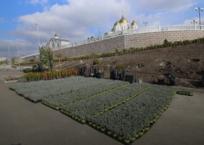 В Геленджике на территории Андреевского парка высадят 23 вида растений, фото — «Рекламы Геленджика»