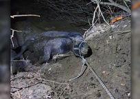 В Гулькевичском районе спасли беременную лошадь, которую засосало в ил ФОТО, фото — «Рекламы Гулькевичей»