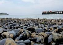 Экологи заявили о загрязнении пляжей на Тамани, в Анапе и Геленджике нефтепродуктами, фото — «Рекламы Геленджика»