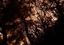 Лопатами, граблями, хлопушами: пожарные снова тушили огонь на горе Колдун на Кубани ФОТО, фото — «Рекламы Геленджика»