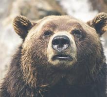 Mini_brown_bear_423202_1280