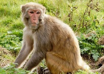 В Сочи поймана сбежавшая обезьяна, фото — «Рекламы Кубани»
