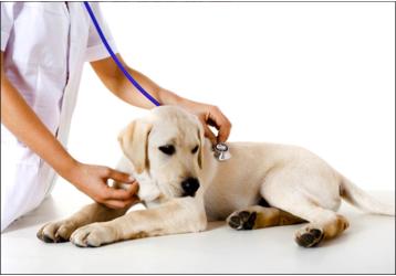 Ветеринарные клиники в Армавире - адреса, услуги, контакты, фото — «Реклама Армавира»