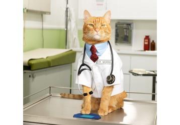 Какие есть ветеринарные клиники в Туапсе, фото — «Реклама Туапсе»