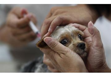 Где привить от бешенства домашнего питомца в Краснодаре - список клиник, фото — «Реклама Краснодара»