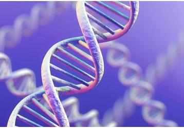 Анализ на ДНК в Адлере: где принимают, фото — «Реклама Адлера»