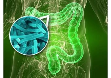 Где можно сдать анализ на дисбактериоз в Новороссийске, фото — «Реклама Новороссийска»