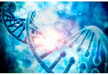 Где проводят анализ на ДНК в Геленджике, фото — «Реклама Геленджика»