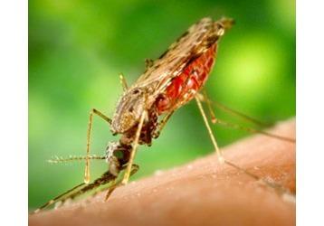 Комары признаны самими опасными убийцами людей, фото — «Реклама Кубани»