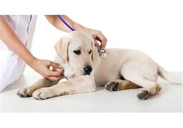 Ветеринарные клиники в Адлере - адреса, контакты, фото — «Реклама Адлера»