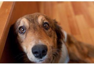 Ветеринарные клиники Геленджика, где и какие, фото — «Реклама Геленджика»
