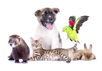Ветеринарные клиники в Новороссийске - где и какие, фото — «Реклама Новороссийска»