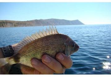 Где ловить рыбу в Новороссийске, фото — «Реклама Новороссийска»
