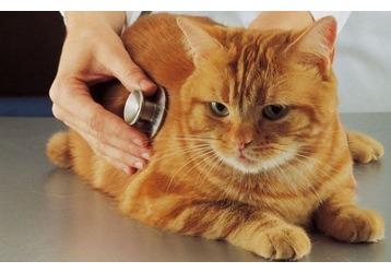 Ветеринарные клиники в Сочи - где и какие, фото — «Реклама Сочи»