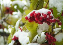 Category_snow03_