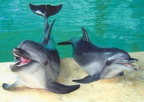 Category_delphin-nemo