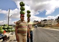 Роспотребнадзор разъяснил, как нужно правильно продавать арбузы, фото — «Рекламы Бахчисарая»