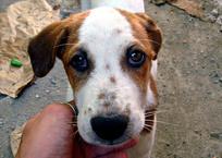 Новые правила содержания и выгула собак для крымчан: трезвый хозяин, поводок и жетон, фото — «Рекламы Бахчисарая»