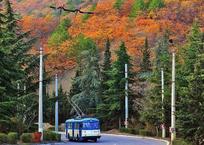 Падающие листья, мороженое и троллейбус: осенние фото крымчан, фото — «Рекламы Гурзуфа»
