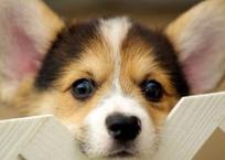 Симферополец рискнул жизнью ради тонущей собаки (Видео), фото — «Рекламы Крыма»