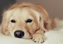 Глава Евпатории призывает отельеров стерилизовать собак, фото — «Рекламы Крыма»