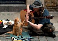 Эксперимент: сколько денег зарабатывают уличные музыканты в Крыму?, фото — «Рекламы Бахчисарая»