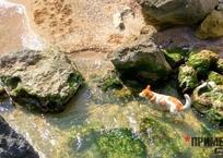 Как в Крыму отдохнуть с крупной собакой, фото — «Рекламы Щелкино»